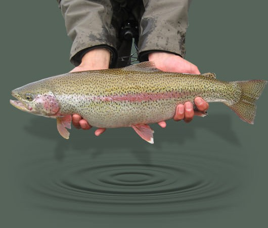 Content_Image_530x330_catch&release