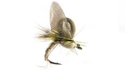flies_3